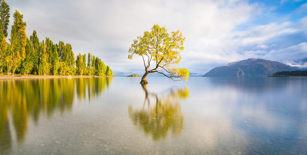 Wanaka lake, Wanaka tree, New Zealand, Wanaka, Southland, New Zealand landscape, Marco Grassi, Marco Grassi Photography,