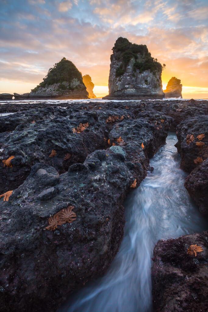 Motukiekie, west coast, starfish colony, Southland, New Zealand landscape, Marco Grassi, Marco Grassi Photography,