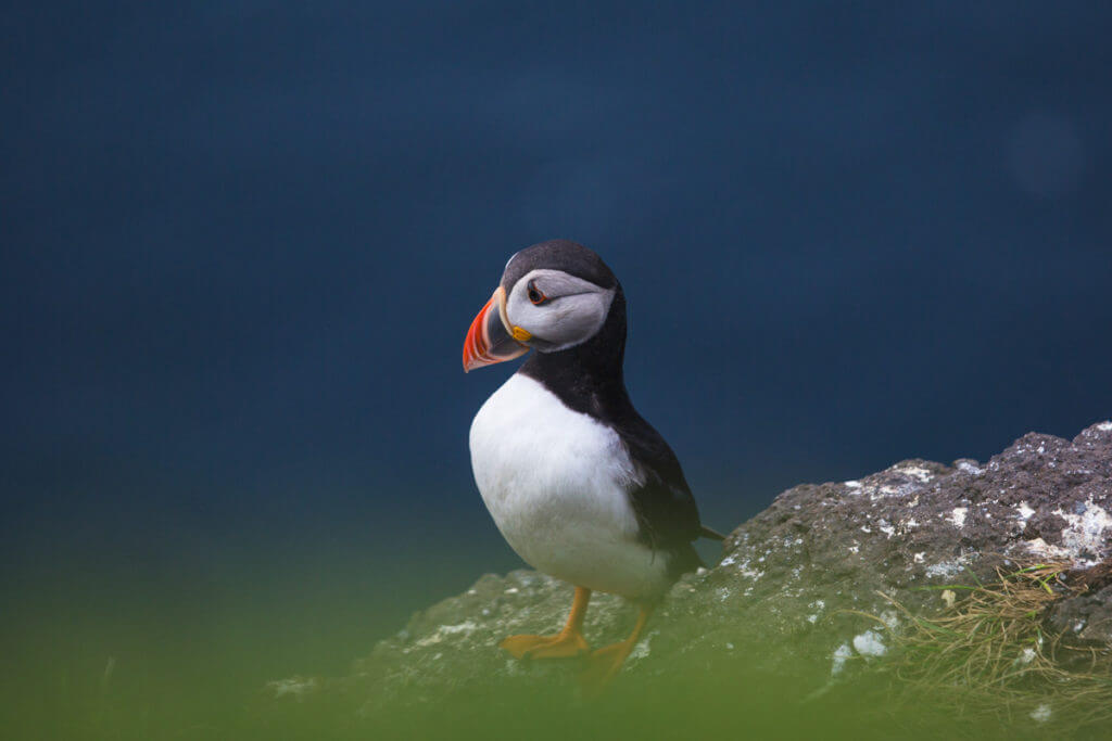 Photographing puffins during the Faroe Islands Photo Tour