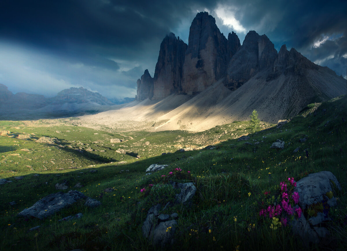 Summer flowers blooming in the Dolomites