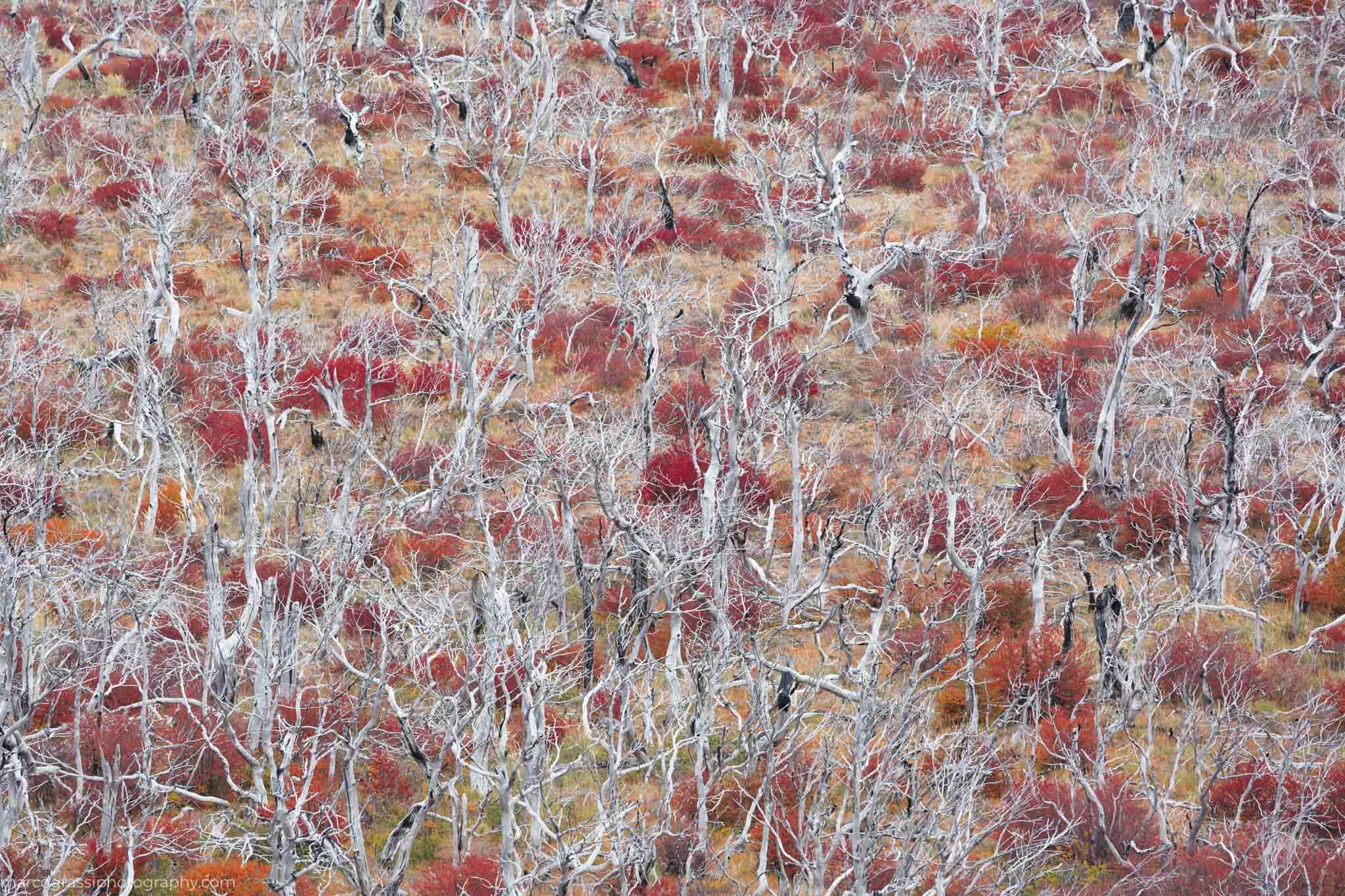 Trees in El Chalten