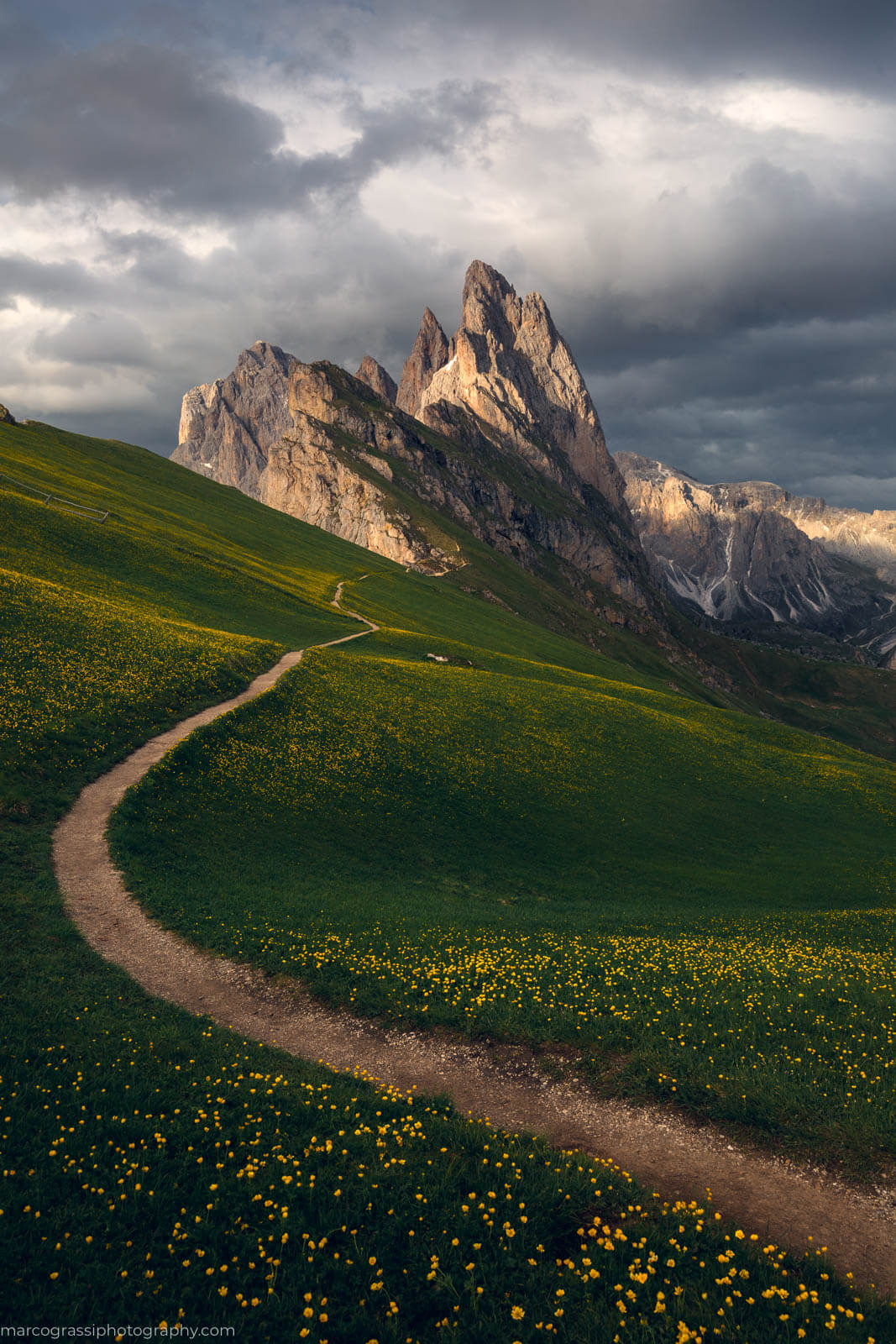 Flowers in Seceda during the summer Dolomites photo tour