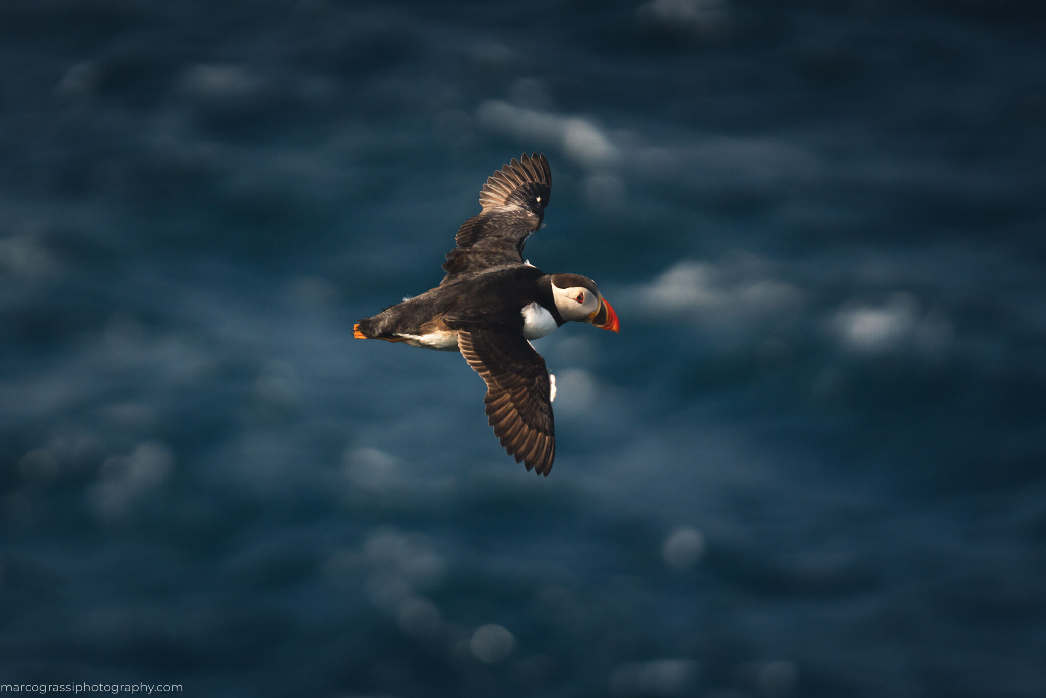 Photographing puffin on Mykines Island Day hike during the Faroe Islands Photo Tour