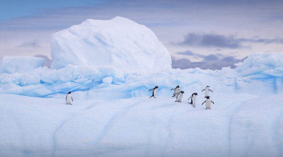 Antarctica Expedition – The Trip of a Lifetime