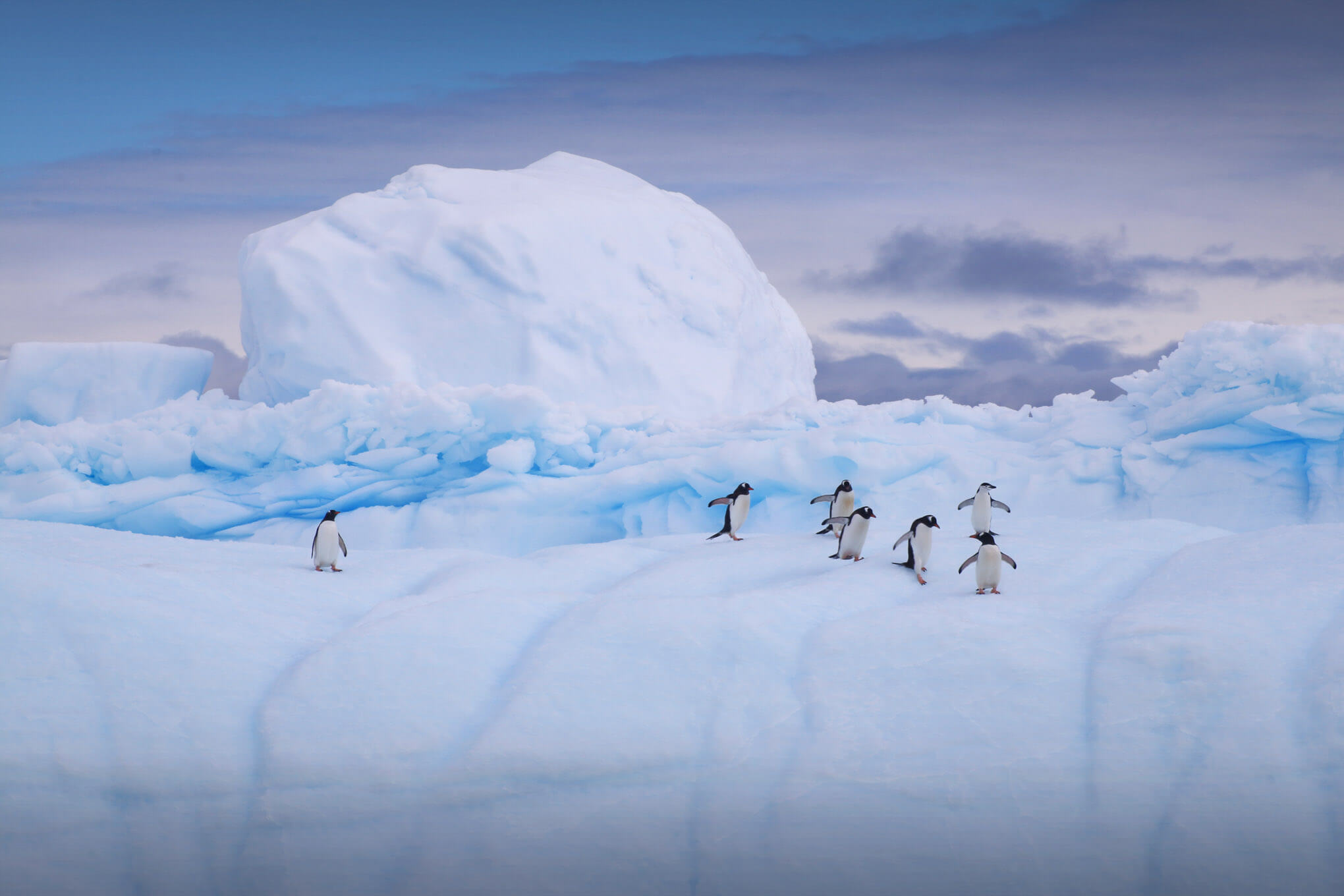 Penguins during the Antarctica Photo Tour with Marco Grassi Photography