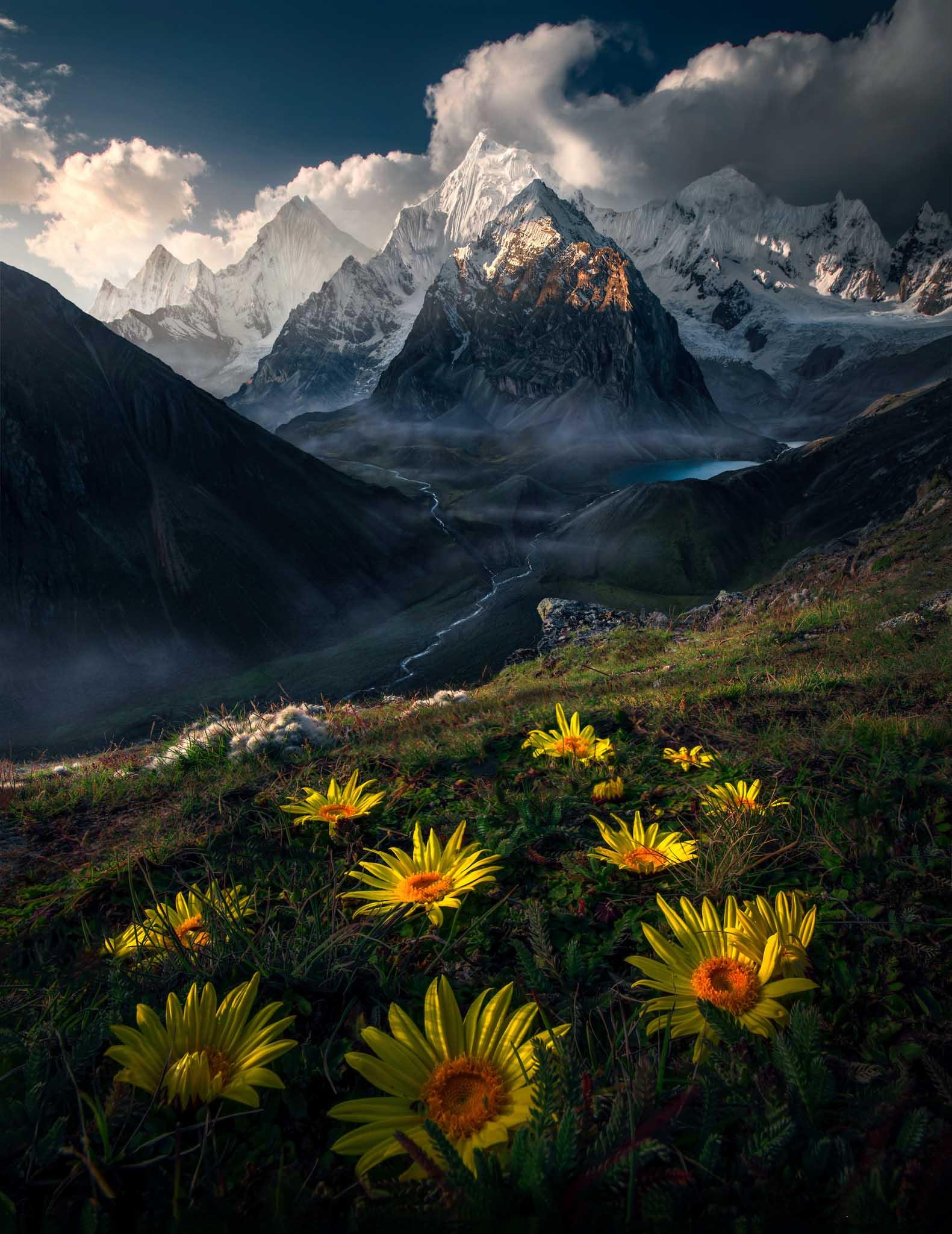 Flowers in Peru