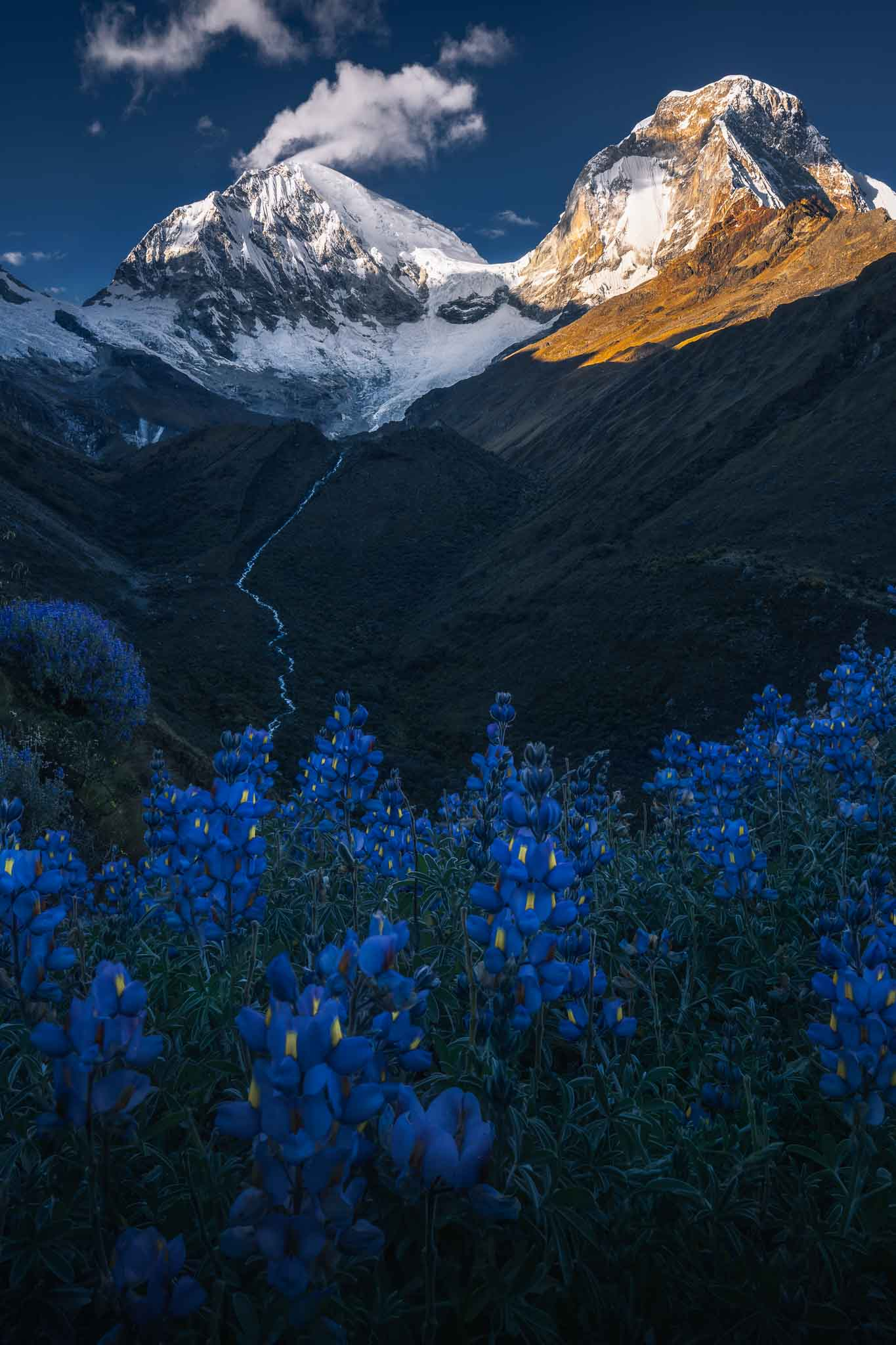 A blooming blue garden during the Peru Photo Tour