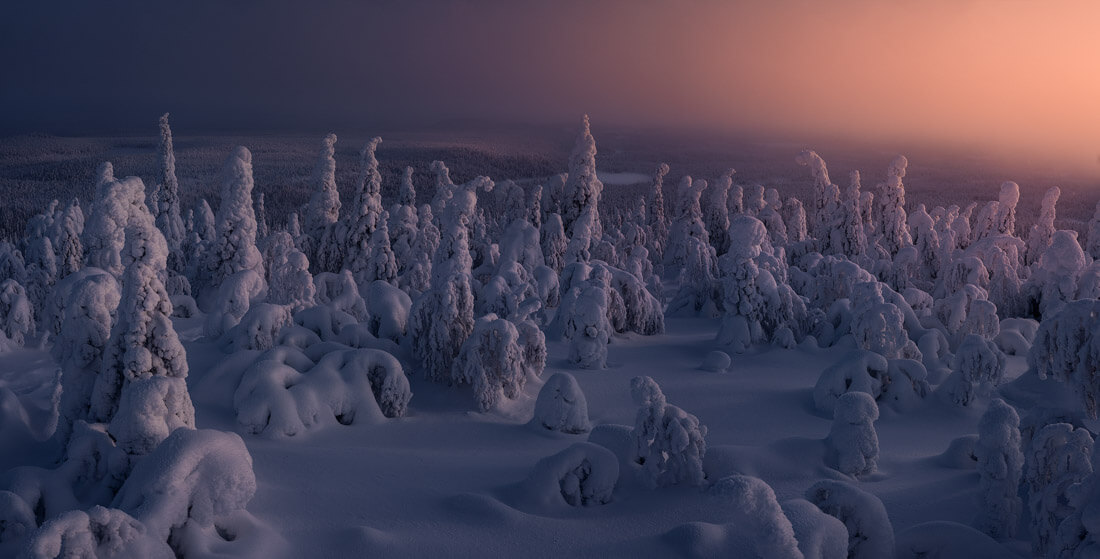 Frozen trees in Lapland, during the photo tour