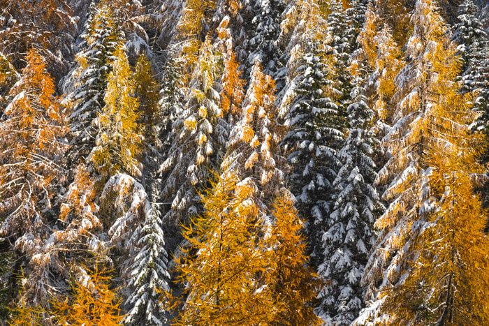 Marco Grassi Presets, Autumn Collection