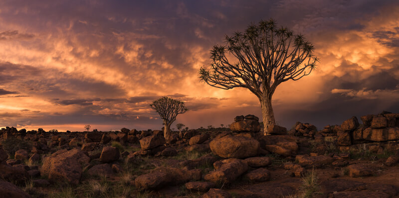 Quiver Tree Forest, Namibia Photo Tour by Marco Grassi Photography